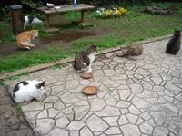新芝運河の猫