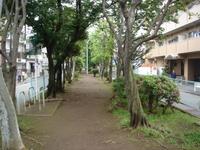 旧呑川緑地2